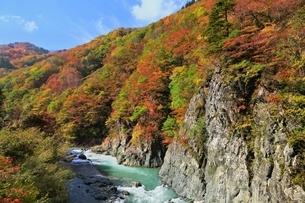 秋山郷 前倉橋より紅葉の中津川渓谷の写真素材 [FYI04829332]