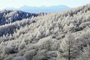 11月 霧氷の高ボッチ高原の写真素材 [FYI04829709]