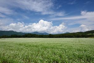 南会津 猿楽台地の蕎麦畑の写真素材 [FYI04830848]