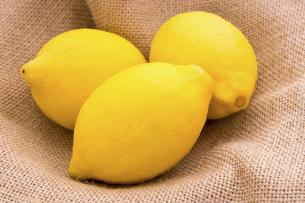 レモンの写真素材 [FYI04830879]