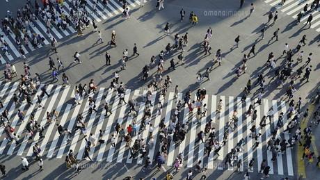 東京・渋谷・スクランブル交差点の写真素材 [FYI04831039]