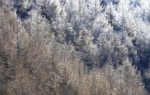 12月 八千穂高原の霧氷の写真素材 [FYI04831322]