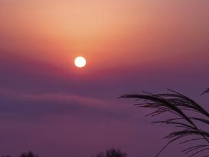 霧の中の朝日とススキの穂の写真素材 [FYI04831327]