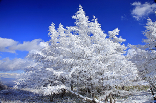 12月 美ヶ原の霧氷の写真素材 [FYI04831864]