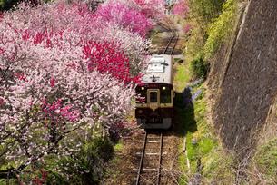 桃源郷を走るわたらせ渓谷鉄道 神戸~沢入 下り列車の写真素材 [FYI04831886]
