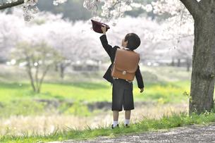 桜の木の下の小学一年生の男の子の写真素材 [FYI04831899]