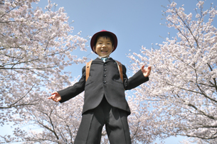 桜並木の下に立つ小学一年生の男の子の写真素材 [FYI04831901]