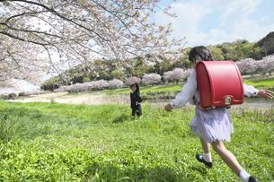 桜の木の下を走る小学一年生の写真素材 [FYI04831916]