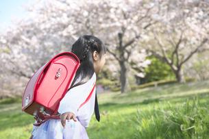 走りだす小学一年生の女の子の写真素材 [FYI04831918]