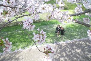 桜の木の下の親子の写真素材 [FYI04831957]