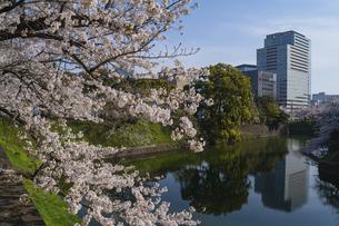 東京 千鳥ヶ淵の桜の写真素材 [FYI04832121]