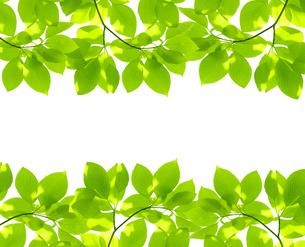 新緑の写真素材 [FYI04832214]
