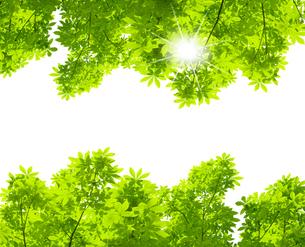 新緑の写真素材 [FYI04832215]