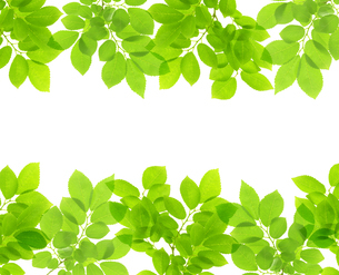 新緑の写真素材 [FYI04832216]