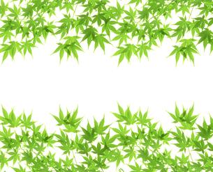 新緑の写真素材 [FYI04832217]