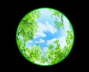 新緑と空の写真素材 [FYI04832220]