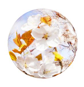 桜の写真素材 [FYI04832337]