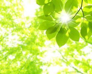 新緑の写真素材 [FYI04832393]