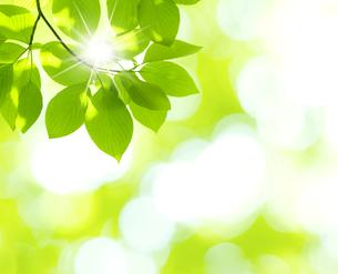 新緑の写真素材 [FYI04832394]