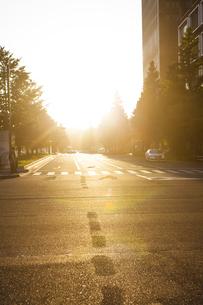 丸の内行幸通りに差し込む夕陽の写真素材 [FYI04832483]