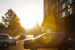 丸の内行幸通りに差し込む夕陽の写真素材 [FYI04832484]