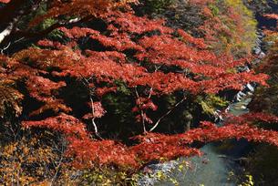 【 奥秩父の紅葉 】 大血川渓谷 金蔵落しの渓流の写真素材 [FYI04832610]