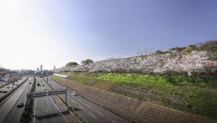 万博記念公園の桜堤。の写真素材 [FYI04832650]