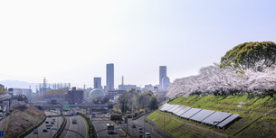万博記念公園の桜堤。の写真素材 [FYI04832651]