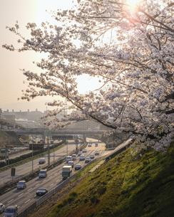 万博記念公園の夕焼け。の写真素材 [FYI04832652]