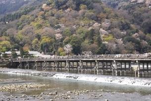 嵐山の桜と渡月橋の写真素材 [FYI04832735]