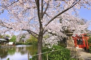 桜咲く神泉苑の写真素材 [FYI04832746]