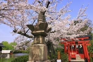 桜咲く神泉苑の写真素材 [FYI04832747]