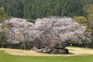 石舞台古墳と桜の写真素材 [FYI04832759]
