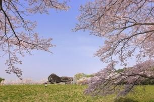 石舞台古墳と桜の写真素材 [FYI04832764]