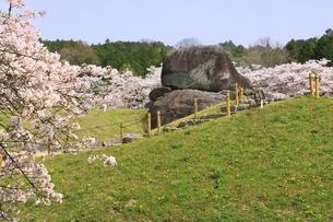 石舞台古墳と桜の写真素材 [FYI04832766]