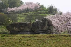 石舞台古墳と桜の写真素材 [FYI04832770]
