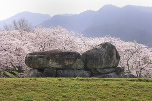 石舞台古墳と桜の写真素材 [FYI04832772]