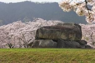石舞台古墳と桜の写真素材 [FYI04832775]