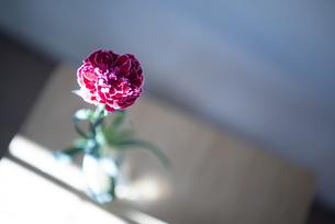 花瓶に生けてあるカーネーションの写真素材 [FYI04832857]
