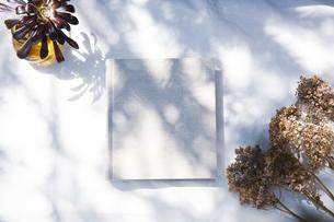 自然光と植物の影が差し込む、白のファブリックに置かれた本の写真素材 [FYI04832954]