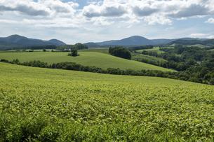 夏の緑の丘陵畑作地帯の写真素材 [FYI04832983]