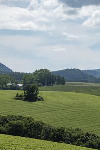夏の緑の丘陵畑作地帯の写真素材 [FYI04832984]