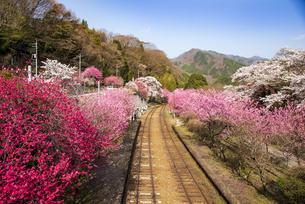 ハナモモや桜の咲くわたらせ渓谷線神戸駅 わたらせ渓谷鐵道の写真素材 [FYI04833246]