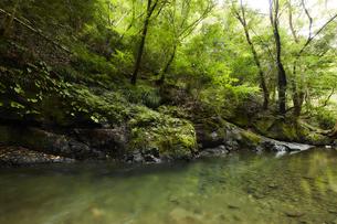 山の中で静かに流れる川の写真素材 [FYI04833262]