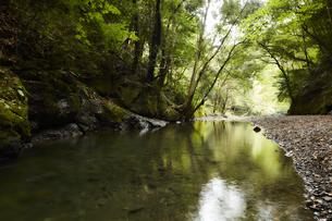 山の中で静かに流れる川の写真素材 [FYI04833263]