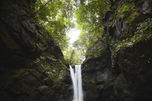 森の真ん中から流れる滝の写真素材 [FYI04833267]