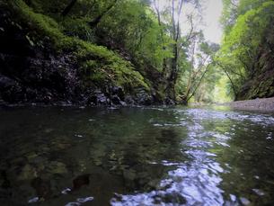 森の中で静かに流れる川の写真素材 [FYI04833270]