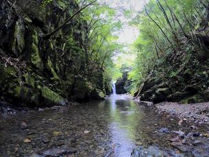 森の中で静かに流れる川の写真素材 [FYI04833272]
