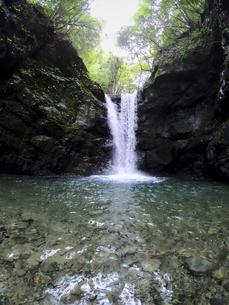 森の真ん中から流れる滝の写真素材 [FYI04833274]