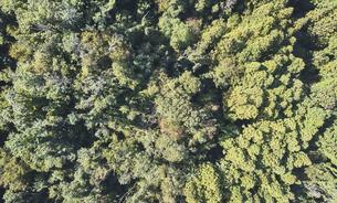 ドローンで撮影した俯瞰で見た森の写真素材 [FYI04833375]